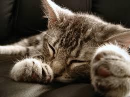 sommeil auto-hypnose